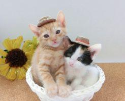 麦わら帽子猫